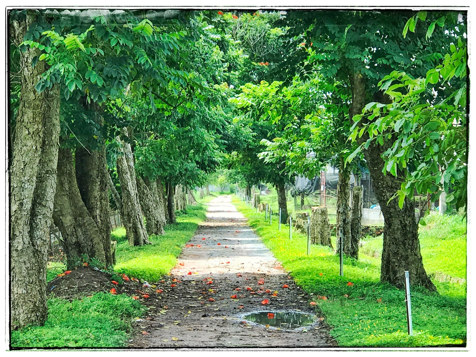 Con đường rợp bóng cây xanh ở Fosaco